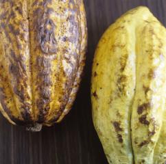 Zwei geschlossene Kakaofrüchte, Kakaobohnen