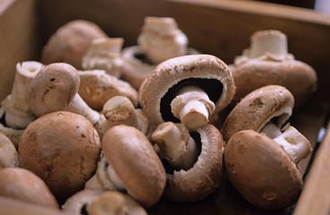 Champignons, Pilze