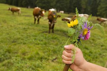 Auf der Kuhweide, Hand mit Bergblumen
