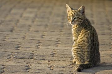 Katze sitzt auf Pflasterstein