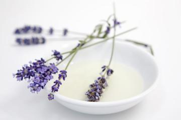 Lavendel Blumen