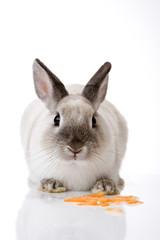 Hase mit Karotte in Scheiben