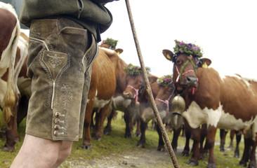 Österreich, Vieh in den Bergen