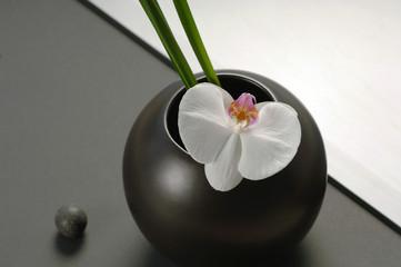 Schwarze Blumenvase mit weißer Orchidee