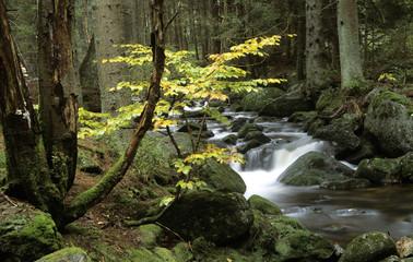 Deutschland, Bayerischer Wald, Gebirgsbach Kaskadierung um Moos-Felsen