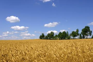 Deutschland, Kornfeld, blauer Himmel und Bäume