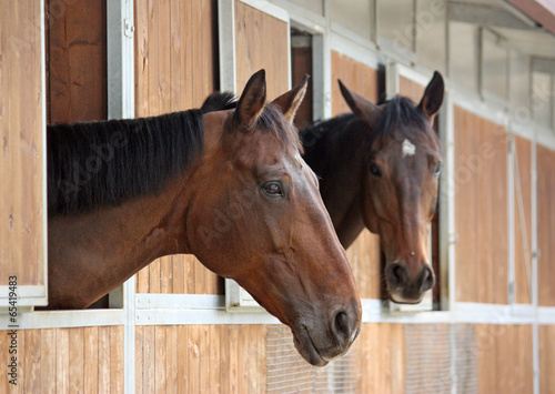 Plexiglas Paardensport two horses in the stable