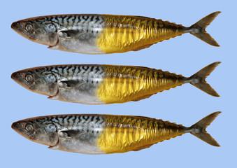 Frisch geräucherte Makrelen