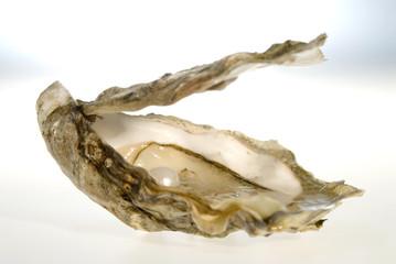 Perlen in Austern, close-up