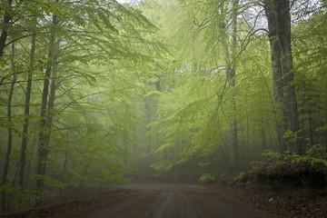 Italien, Toskana, Wald in Italien