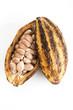 Kakaopflanze, geöffnet, Kakaobohnen