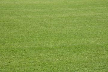 Rasen des Golfplatzes