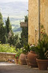 Italien, Pienza, Topfpflanzen