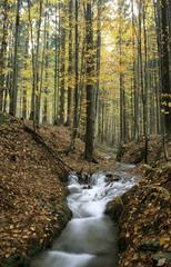 Deutschland, Bayerischer Wald, in der Nähe von Buchenau