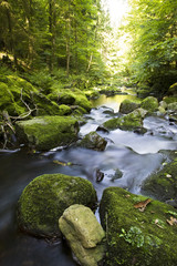 Deutschland, Bayerischer Wald, Buchberger Leite Brook