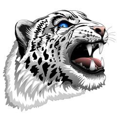 Snow Leopard Roar on white
