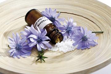 Flasche mit Bachblüten, Chicorée (Cichorium intybus) auf Holzplatte
