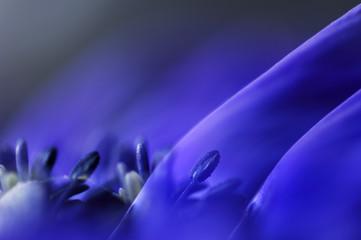 Anemone, close-up