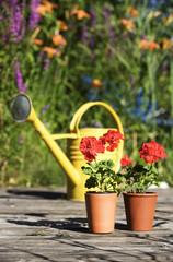 Gelbe Gießkanne und Topfpflanzen