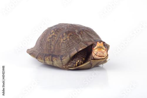 Deurstickers Schildpad Turtle