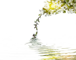 cherry blossoms above water.