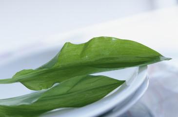 Bärs Knoblauch (Allium ursinum)