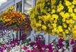 Blumenampeln auf Terrasse