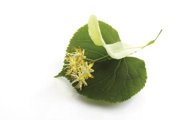 Limetten, Blüten und Blätter