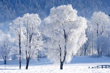 Österreich, Salzburger Land, Bäume im Schnee