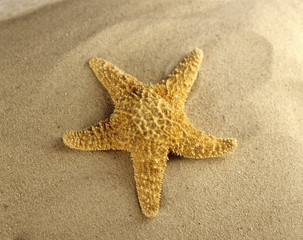 Starfish am Strand, close-up