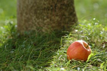 Apfel auf Gras