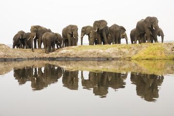Afrika, Botswana, Chobe National Park, Elefanten am Chobe Fluss