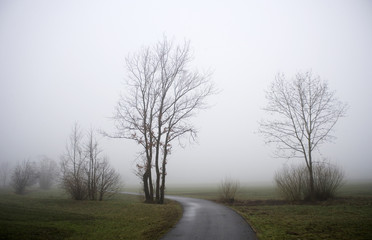 Bäume in nebliger Landschaft