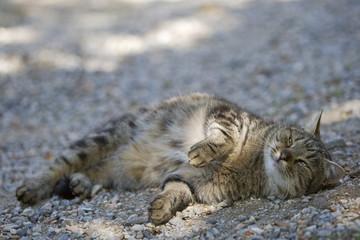 Katze liegt auf der Straße
