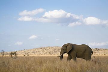 Südafrika, Krüger Nationalpark, Elefant