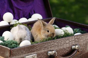 Kaninchen sitzt im Aktenkoffer mit Eiern