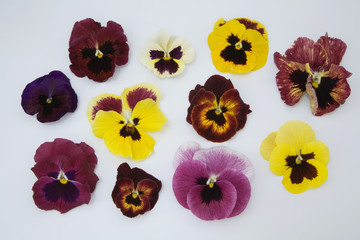 Stiefmütterchen Blütenblätter