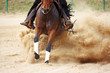galloping horse in reining competition - 65428288