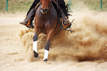 galloping horse in reining competition