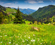 Beautiful summer landscape in the Italian Alps