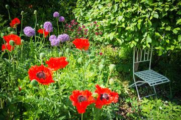 Mohnblumen, Zierlauch, Stuhl unter dem Baum