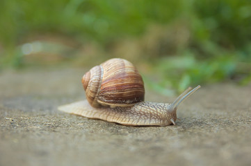 Snail travel on road