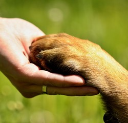 Dogs paw and mans hand