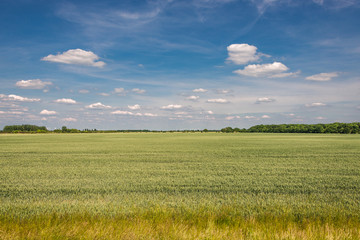 Late Spring, Early Summer landscape of cereal field in Germany