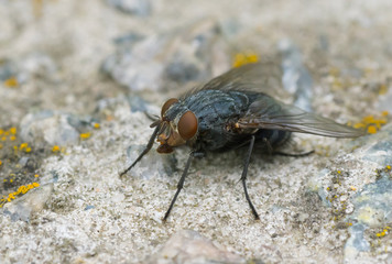 Fly sitting on a stone