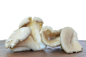 Oyster mushrooms - Pleurotus ostreatus closeup