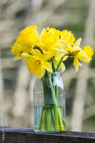 Poster Narcis Daffodil flowers in a jar