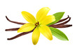 Vanilla pods and flower - 65444830