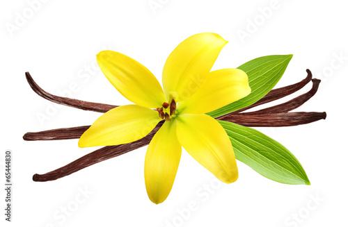 Vanilla pods and flower - 65444830