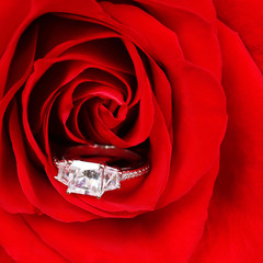 Engagement Ring in Red Rose. Macro